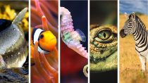 What is The Aquarius Woman's Spirit Animal?