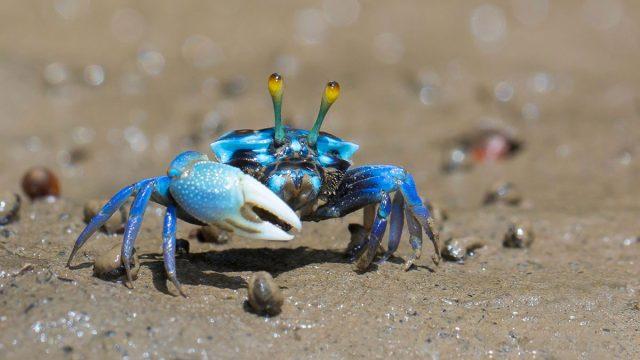Cancer woman animal crab